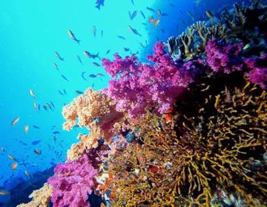 Arrecife coralino en Ras Mohamed
